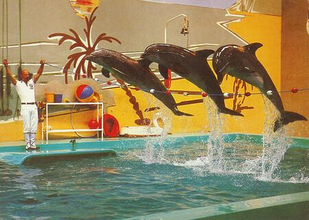Die Palm-Beach-Delphinsschau mit den 3 Flipper-Clowns.