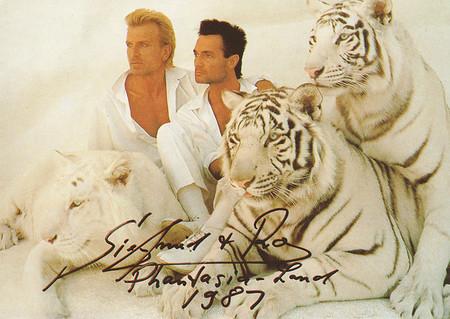 Siegfried & Roy mit 3 weißen Tigern und ihr Autogramm aus dem Jahr 1987